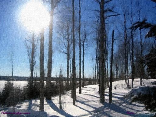 Padurea de plopi iarna