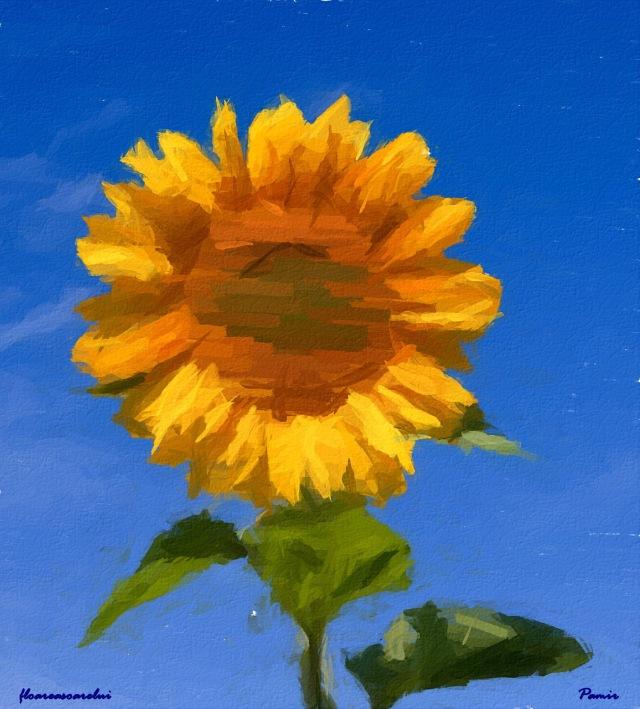 Floareasoarelui w